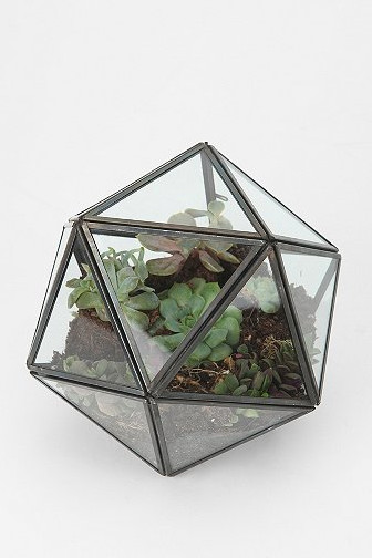 Turning Triangles Terrarium contemporary-terrariums