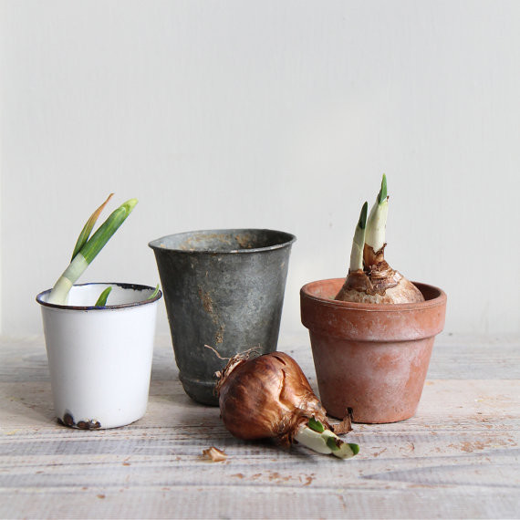 Vintage Planting Pots traditional-indoor-pots-and-planters