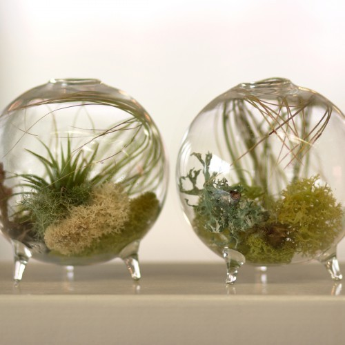 Footed Aerium modern-indoor-pots-and-planters
