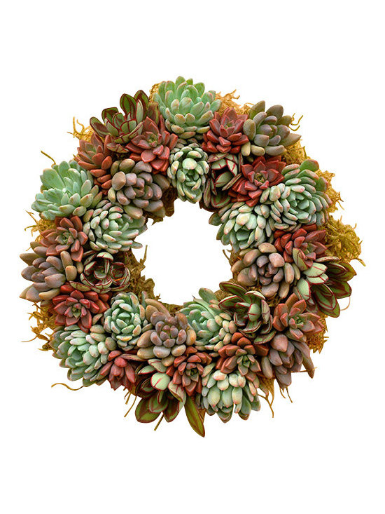 Flora Pacifica - Echeveria With Sedum Wreath - A gorgeous succulent product that looks great as a centerpiece or a hanging wreath.  The plants are a great compliment to each other.  There are 33 plants in the wreath, Echeveria Tolimensis, Red Hood and Nodulosa.  It also has the red Sedum Vera Higgins which really highlights the Echeverias.