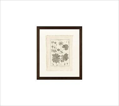 """Framed Vintage Print, Botanical Plate 449, No Mat, 11 x 13"""", Espresso traditional-artwork"""