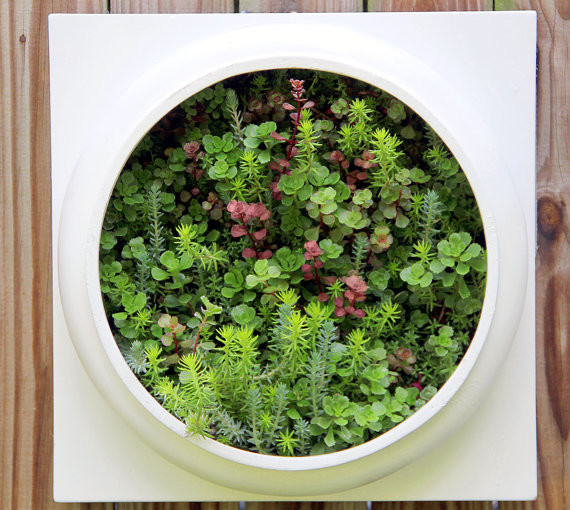 Living Wall Planter Comes Preplanted by Twisted Metals contemporary indoor pots and planters