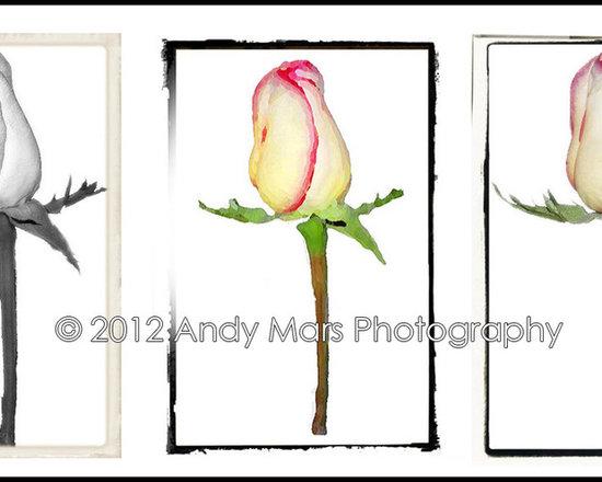 Three Roses - Three Roses © Andy Mars Photography