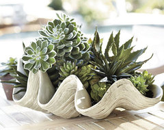 Giant Clam Shell tropical-accessories-and-decor