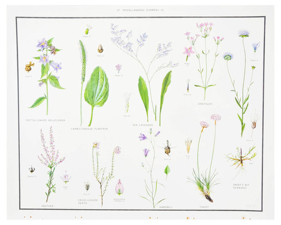 Miscellaneous Flowers IV Print, c. 1927 -