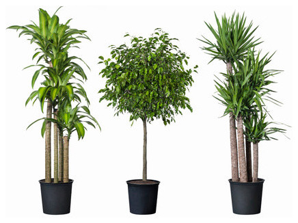27 superb modern indoor plants – voqalmedia