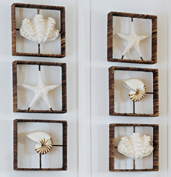 Wall Art Shadow Box : Starfish nautilus clam shadow boxes contemporary