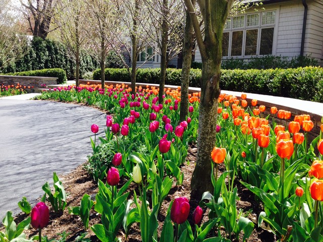 Spring Bulb Design Traditional Landscape boston by