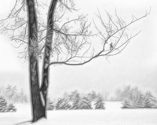 Foggy Winter Landscape - Fractalius 5 -