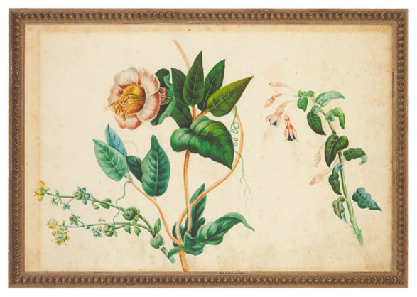 """""""Botanical"""" Print traditional-prints-and-posters"""