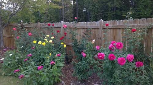 Rose Garden Pictures