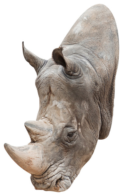 Rhino Mount, Adhesive Wall Decal contemporary-wall-decals