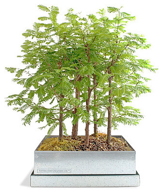 Bonsai Forest asian-plants