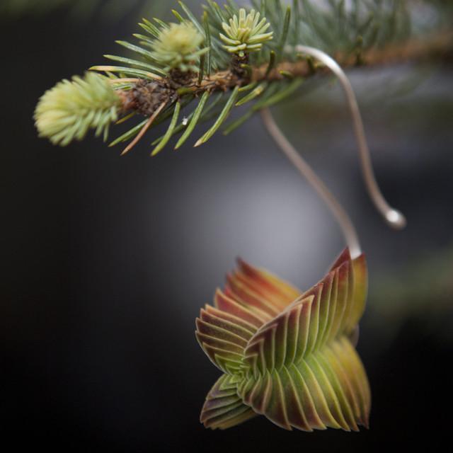 Succulent Ornament modern-christmas-ornaments