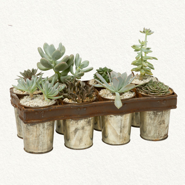 Succulent Baking Tray eclectic-plants