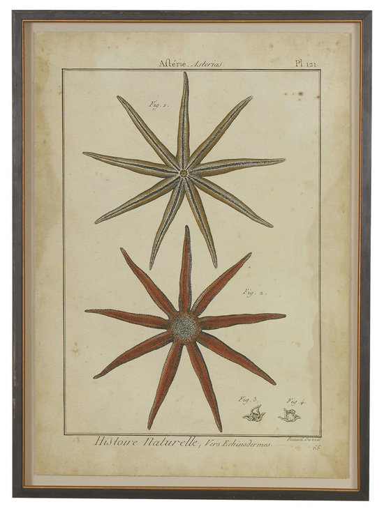 Ethan Allen - Antique Starfish Study - The sketch has the authentic appeal of an aged nature study. In a solid wood shadow box frame, our gicl?e floats above an antiqued linen backdrop. The float is a modern framing option; the black and antiqued gold frame is pure tradition.