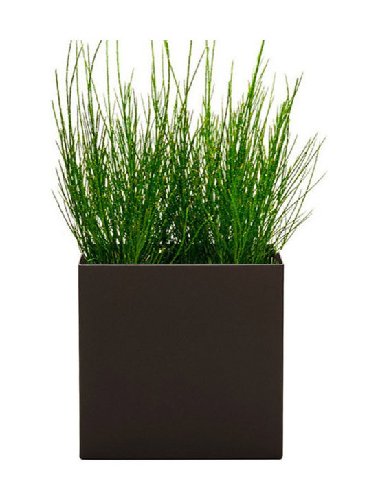 Modern Planter - Modern Cube Planter - Bronze, Medium - Made with maintenance of plants in mind, the perfect / low profile edge allows for easy removal of oversized plants without catching or damaging the root ball when in need of trimming. The bronze finish is a powder coat with the appearance of architectural bronze in a matte finish.