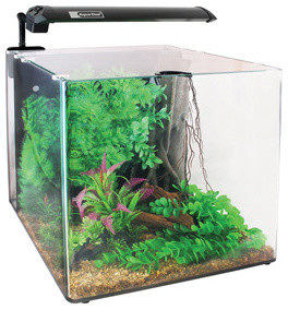 ... Contemporary - Aquariums & Fish Tanks - other metro - by Pets at Home