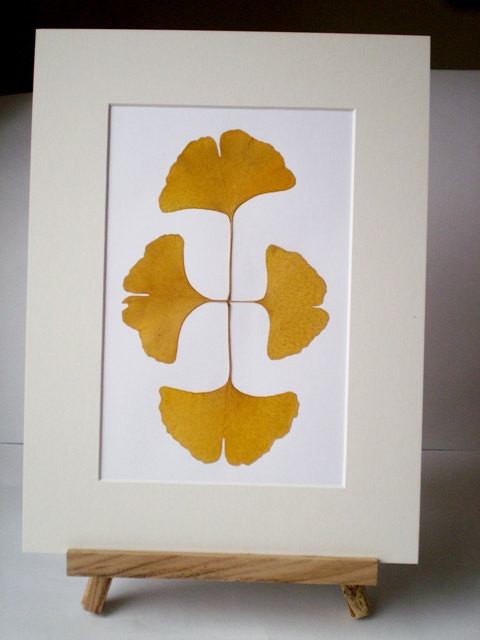 Four Yellow Ginkgo Leaves Pressed by Maple Shoppers traditional-artwork