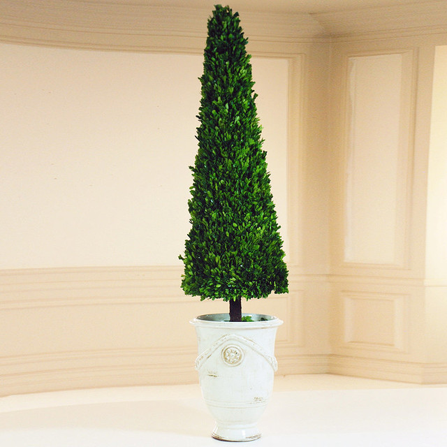 Estate Boxwood Cone Topiary In White Urn Traditional