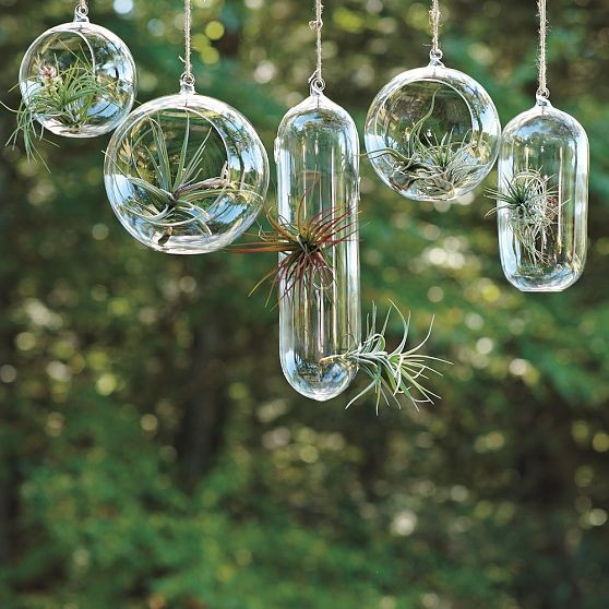 Shane Powers Hanging Glass Bubble Collection contemporary-indoor-pots-and-planters