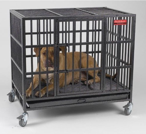 Empire Dog Crate Modern Dog Kennels And Crates