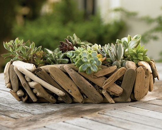 "Viva Terra - Driftwood Succulent Garden (round) - We've paired two rugged natural survivors of wind and storm-succulents and driftwood- and given them safe harbor in a compact indoor garden that is easy to grow and even easier to enjoy. Surf and sand-smoothed Oregon coast driftwood forms a compact, rustic exterior for our handcrafted planters. Hardy, low maintenance and eco-friendly succulents thrive for many months when watered no more than every six to eight weeks. 15""L x 5""H"