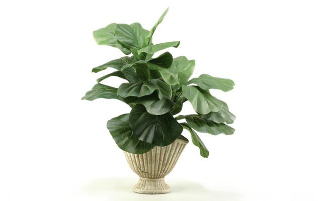 D&W Silks Fiddle Leaf Fig in Ceramic Planter traditional-artificial-flowers