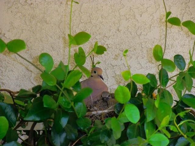 Bird and Baby