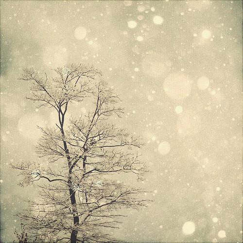 Snow bokeh tree wall art by marianne lomonaco photography contemporary artwork by etsy - Wall decor photography ...
