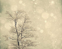 Snow Bokeh Tree Wall Art by Marianne LoMonaco Photography contemporary artwork