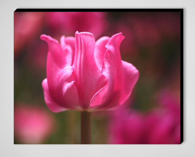 Tulip at Attention by Rona Black contemporary-prints-and-posters