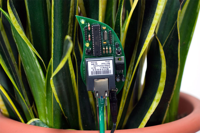 Botanicalls Plant Monitor  home electronics
