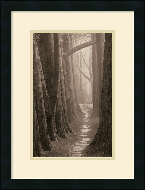 Cypress Trail Framed Print by Paul Kozal traditional-prints-and-posters