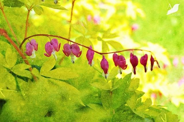 Garden Photos  |  Allenaim Gardens