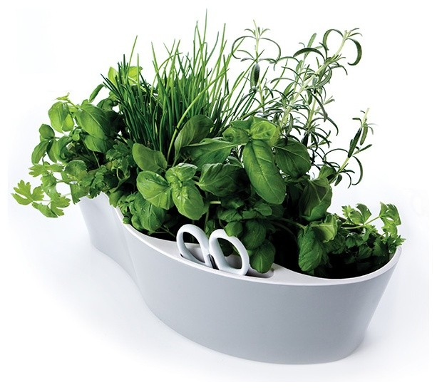 Herb Garden Royal VKB contemporary plants