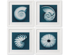 John Kuss Seashells With Blue Background tropical artwork