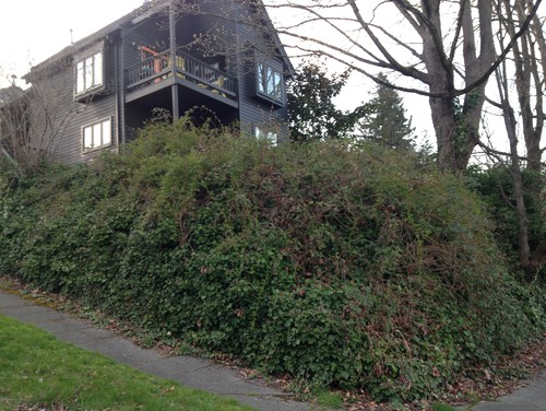 how to get rid of ivy in your yard