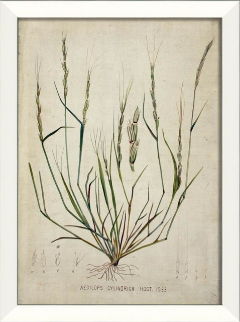 Botanical IV Framed Artwork contemporary-prints-and-posters