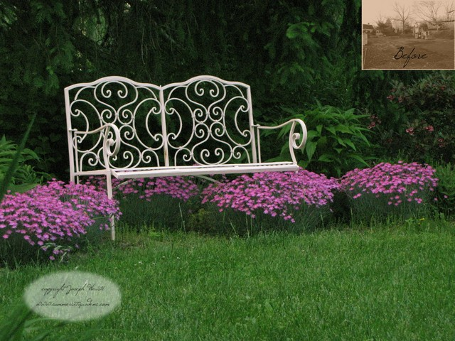 Dianthus & Garden Bench traditional landscape