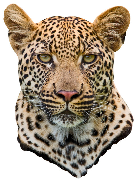 leopard mount adhesive wall decal contemporary wall leopard laying wall decal rsting predator vinyl sticker
