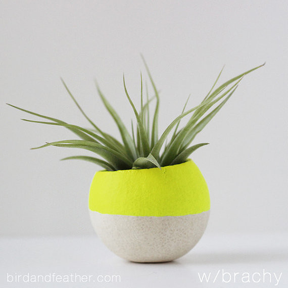 Neon Yellow Air Plant Pot With Air Plant By Bird And
