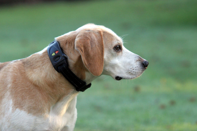 pet care Dog Tracking Collar