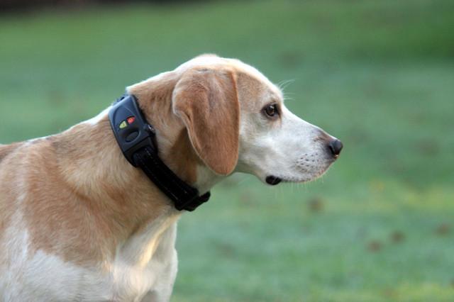 Dog Tracking Collar pet-supplies
