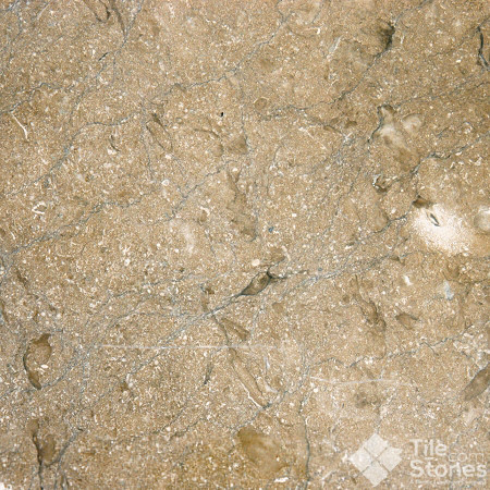 Chestnut Brown 12x12 or 16x16 Polished Limestone contemporary-floor-tiles