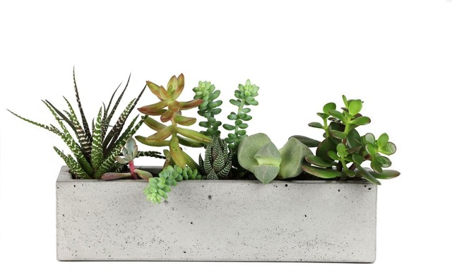 Concrete Windowsill Planter Modern Indoor Pots And Planters By Rough Fu