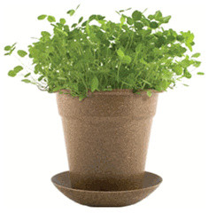 Rice Hull Pot - Good Luck Clover contemporary indoor pots and planters
