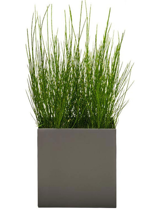 Modern Planter - Modern Cube Planter - Pewter, Medium - Made with maintenance of plants in mind, the perfect / low profile edge allows for easy removal of oversized plants without catching or damaging the root ball when in need of trimming. The pewter color is a rich dark industrial gray.