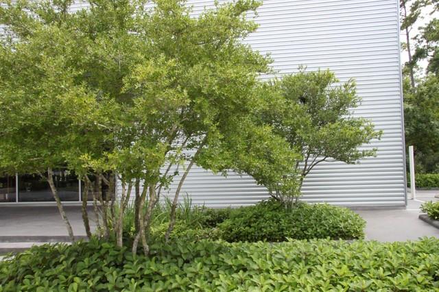 Bayou Bend Visitor Center eclectic-landscape