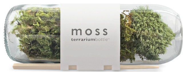 Terrariums by seedsnow.com